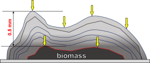 Difusión en la biomasa